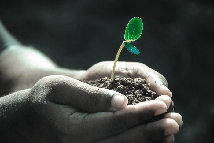 A child's hands hold a seedling in dirt