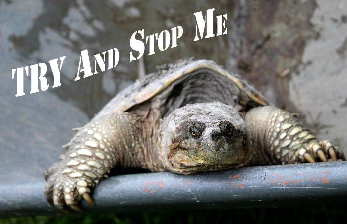 turtle climbing upwards